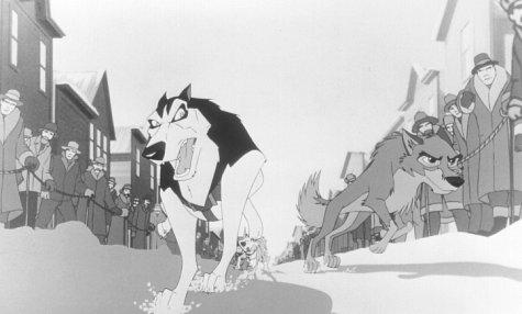 Steele the Sled Dog