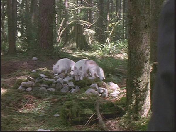 The X-Files - Season 1 Episode 4:Conduit